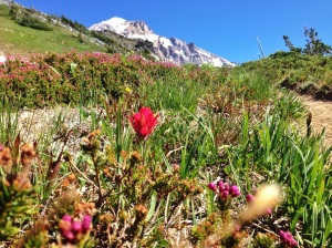 Wildflowers_Mt. Hood.jpg